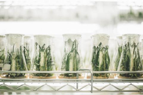 Tipos de laboratorios