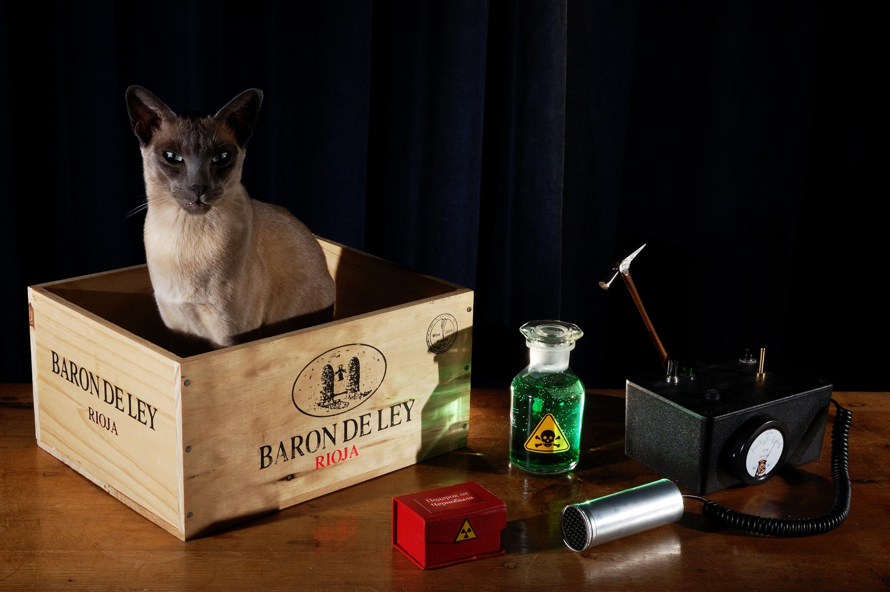 Gato Schrödinger real