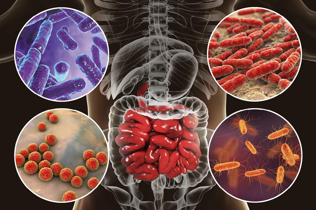 Bacterias cuerpo
