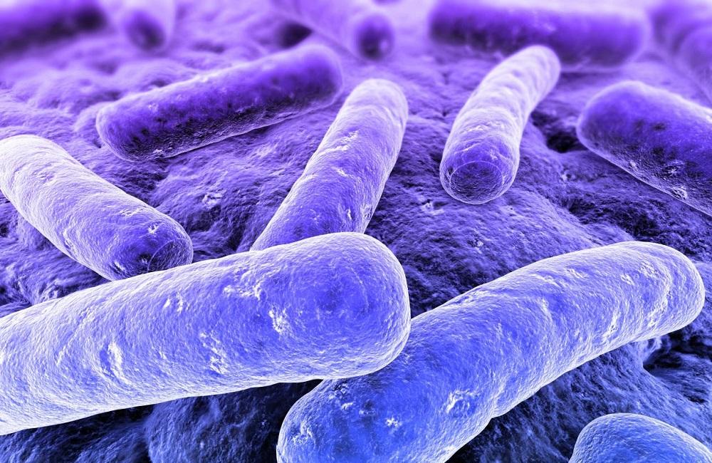 Bacteria bacilo