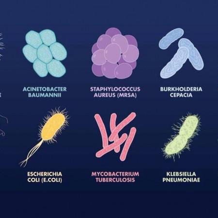 Los Diferentes Tipos De Bacterias Y Sus Características