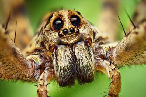 Arañas más venenosas peligrosas