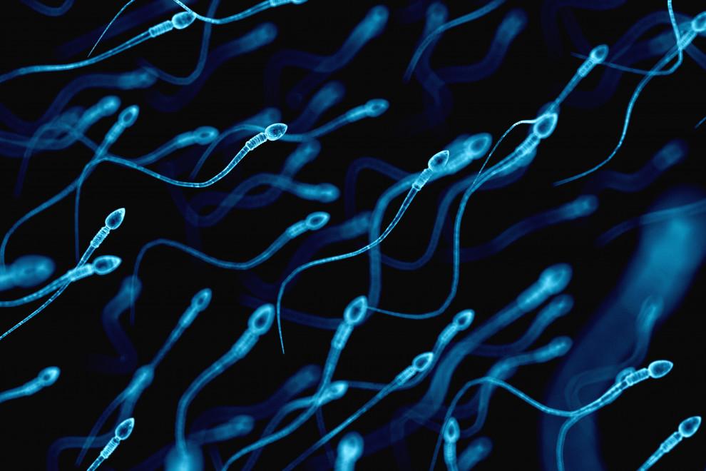 Tiempo vida espermatozoide