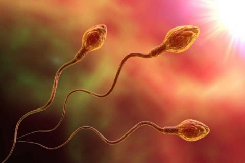 Fases espermatogénesis