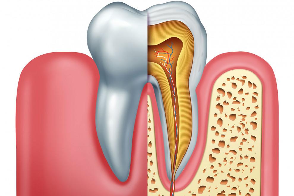 Partes diente
