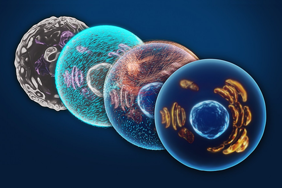 Tipos de células del sistema inmune