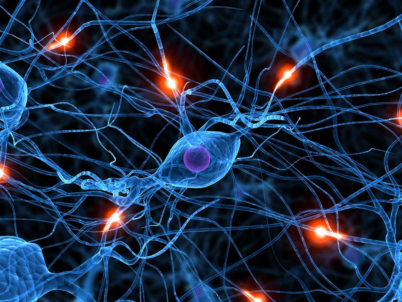 Neuronas estrés