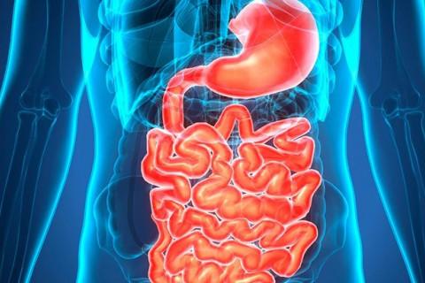 Enfermedades del aparato digestivo más comunes
