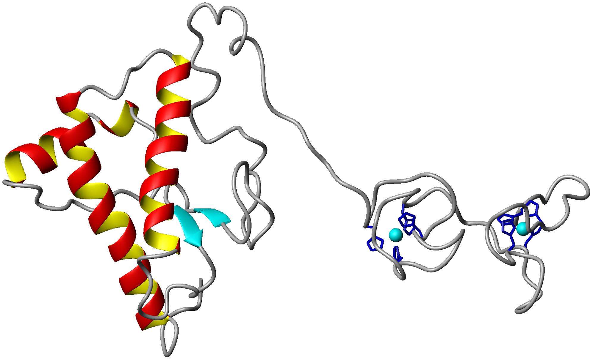 Infección prión
