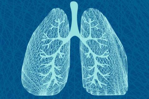 Partes de los pulmones