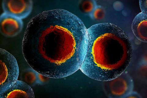 Tipos células cuerpo humano