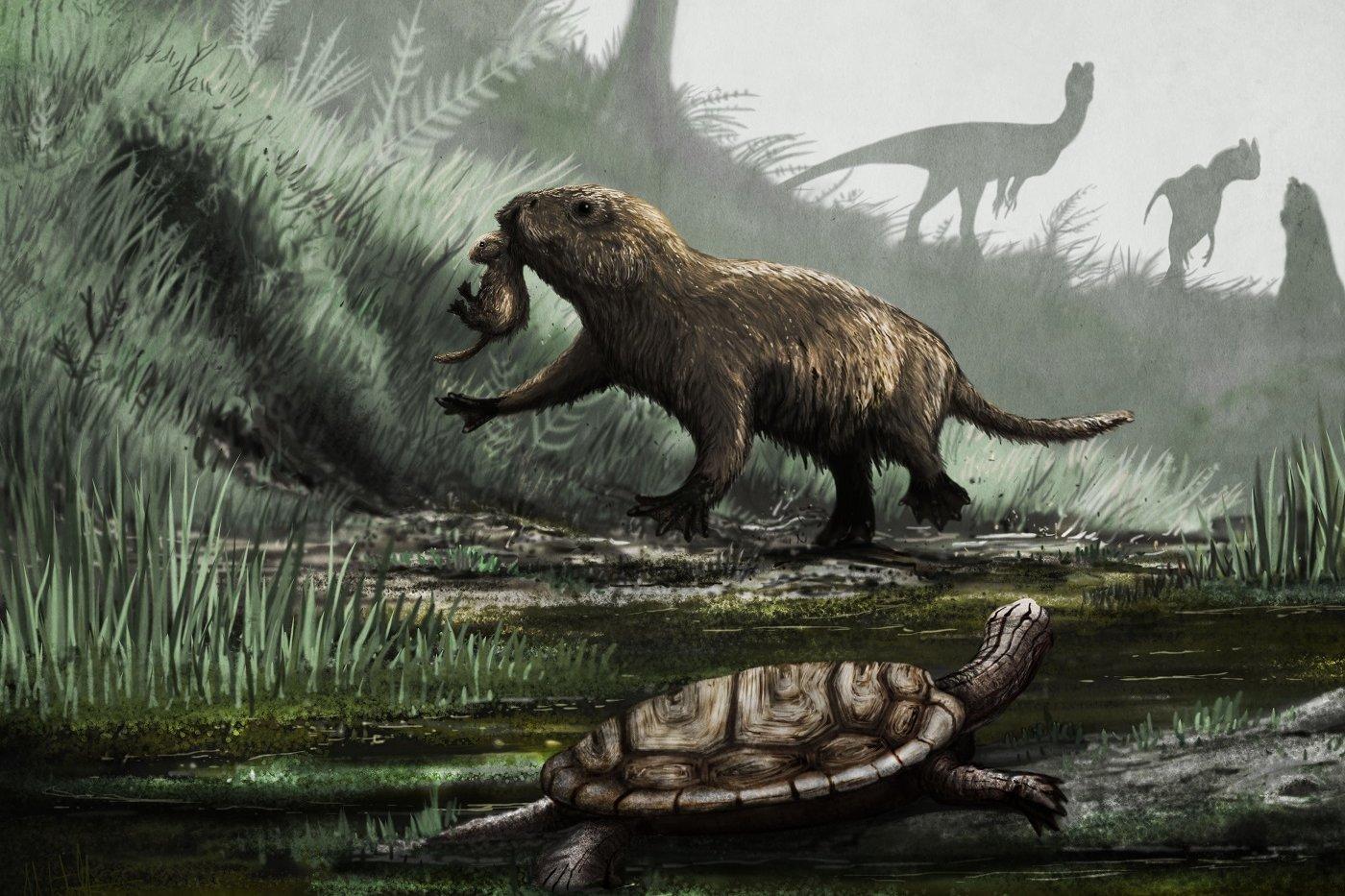 Periodo paleogeno
