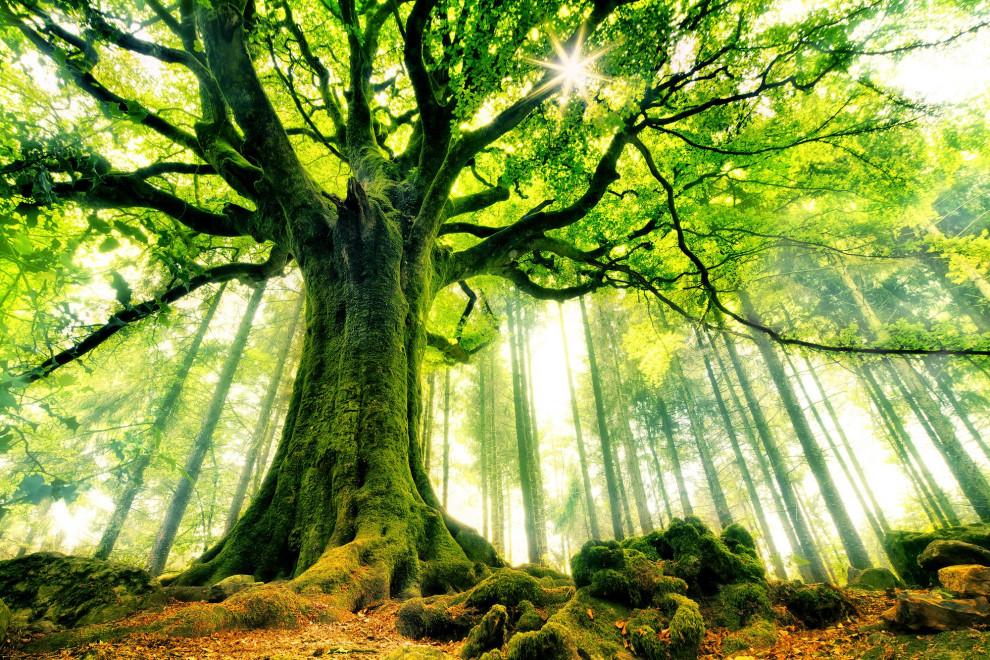 Tipos árboles