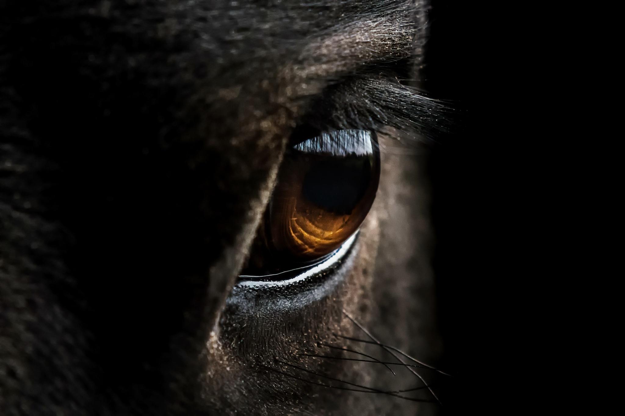 Ojos caballo