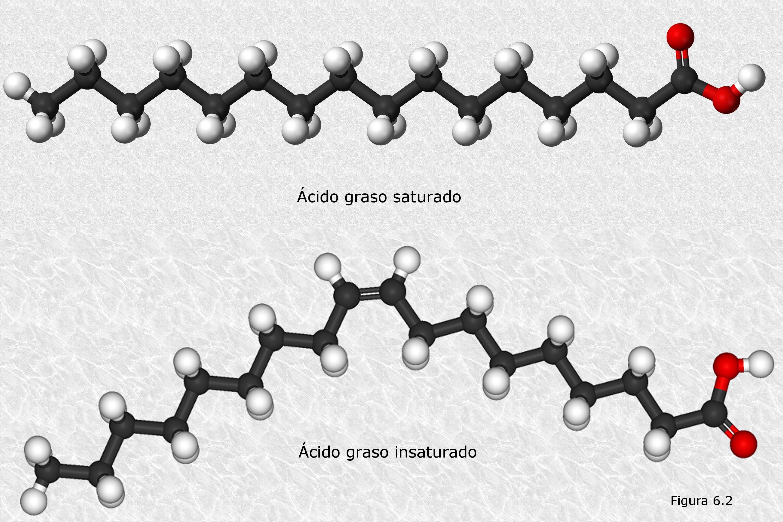 Ácido graso insaturado