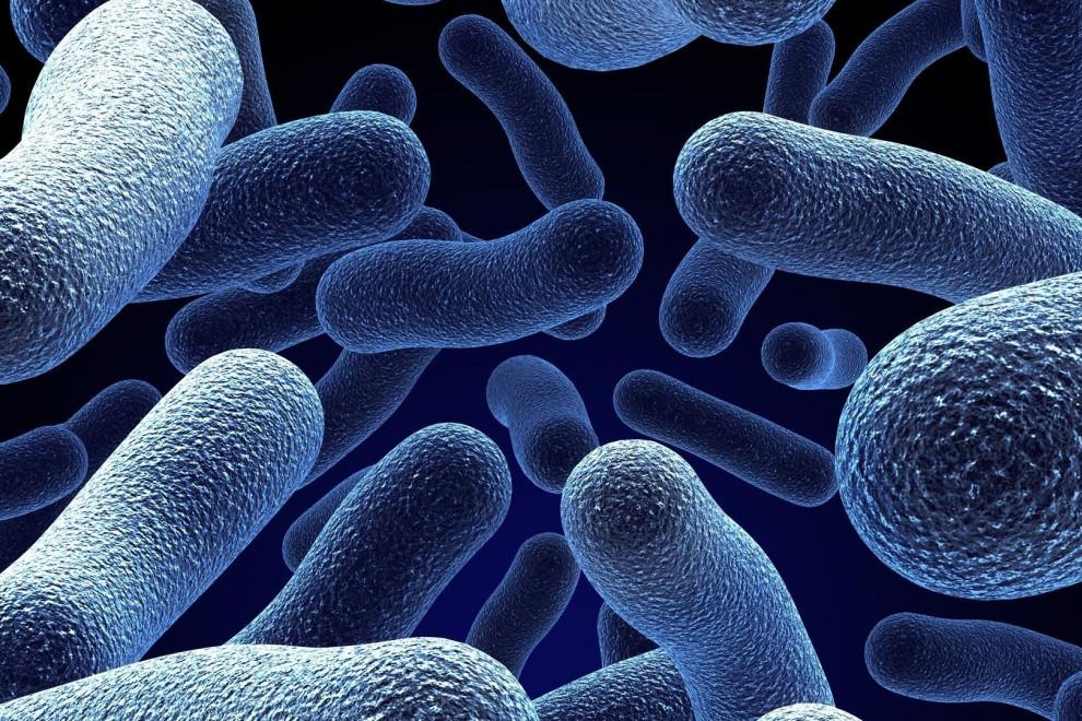 Reino bacteria