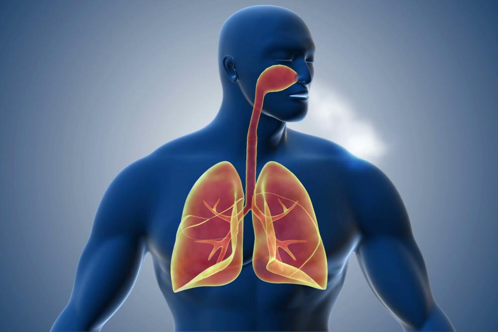 Partes sistema respiratorio