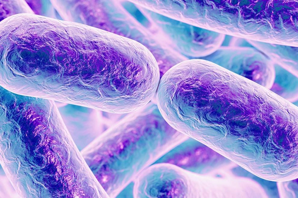 Estudiar Microbiología