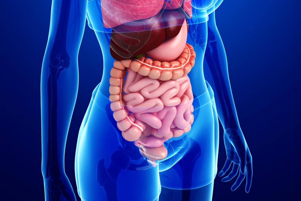 Partes sistema digestivo