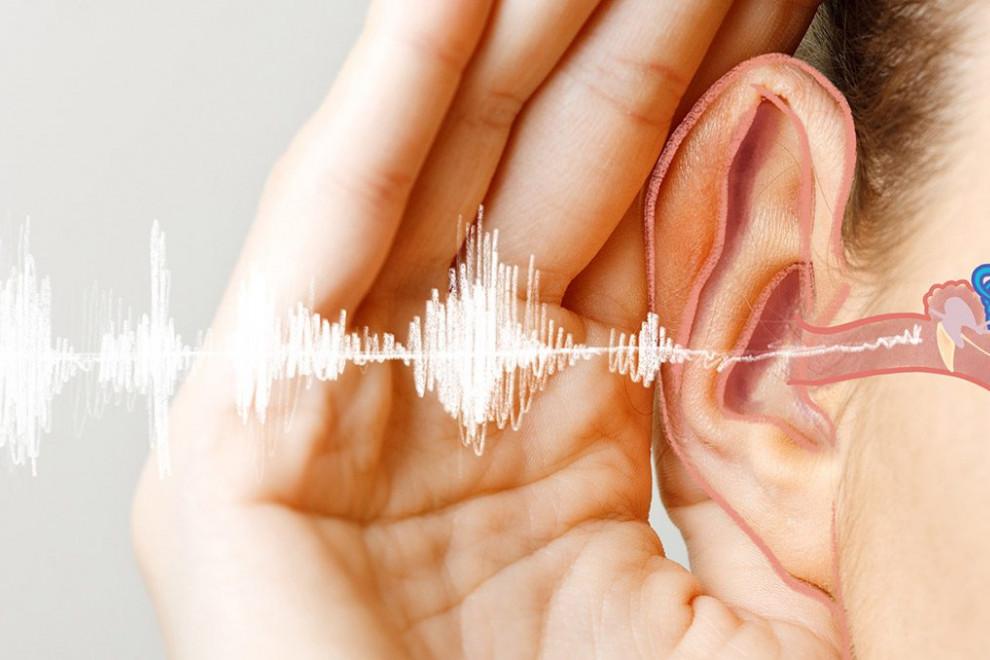 Sentido oído