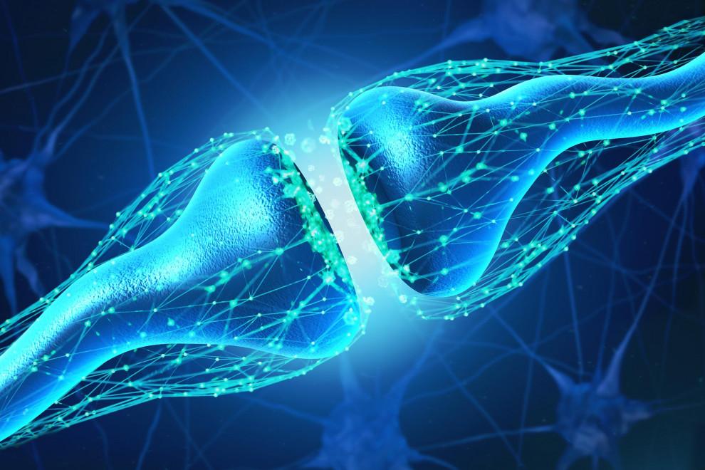 Cómo funciona sinapsis