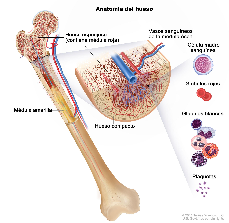 Leucemia mielógena crónica