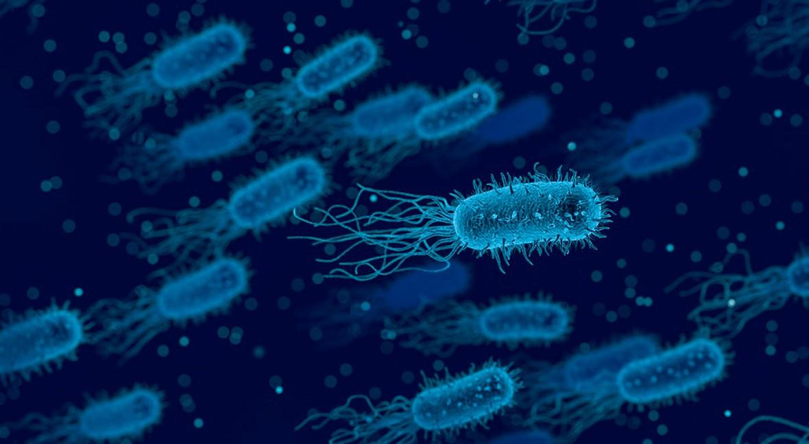 Contaminación microbiológica
