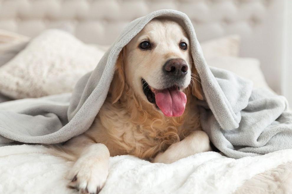 Convivir con mascotas mejora sistema inmune