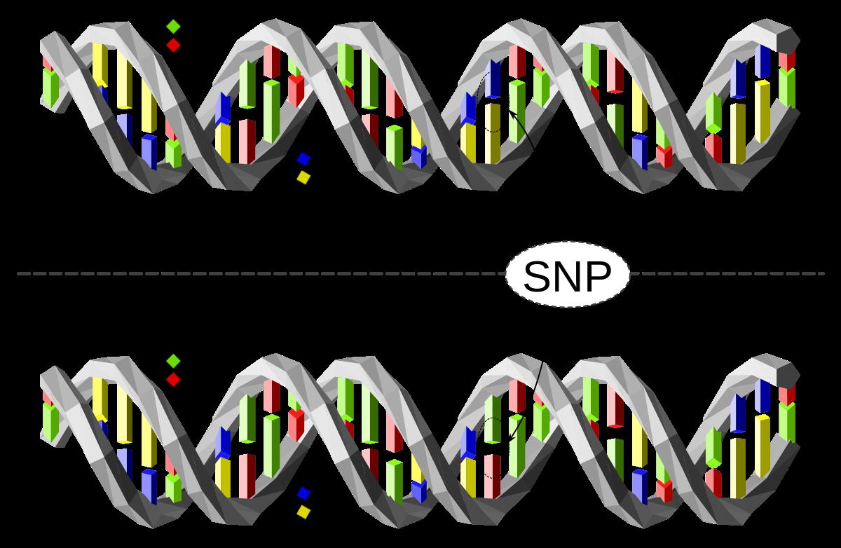 Genes polimórficos