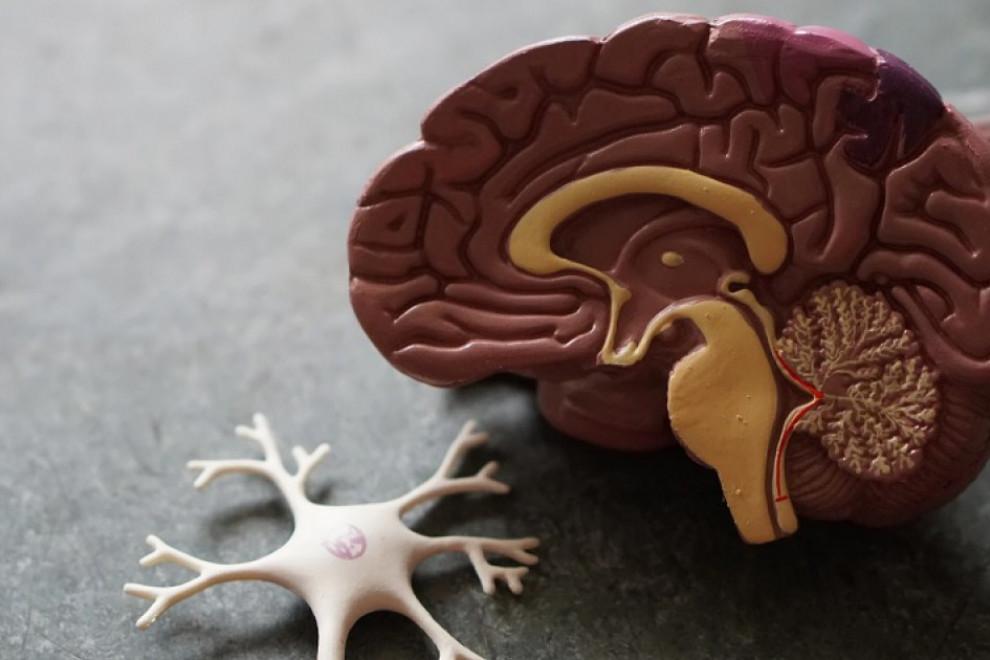 Mejores másters neuropsicología