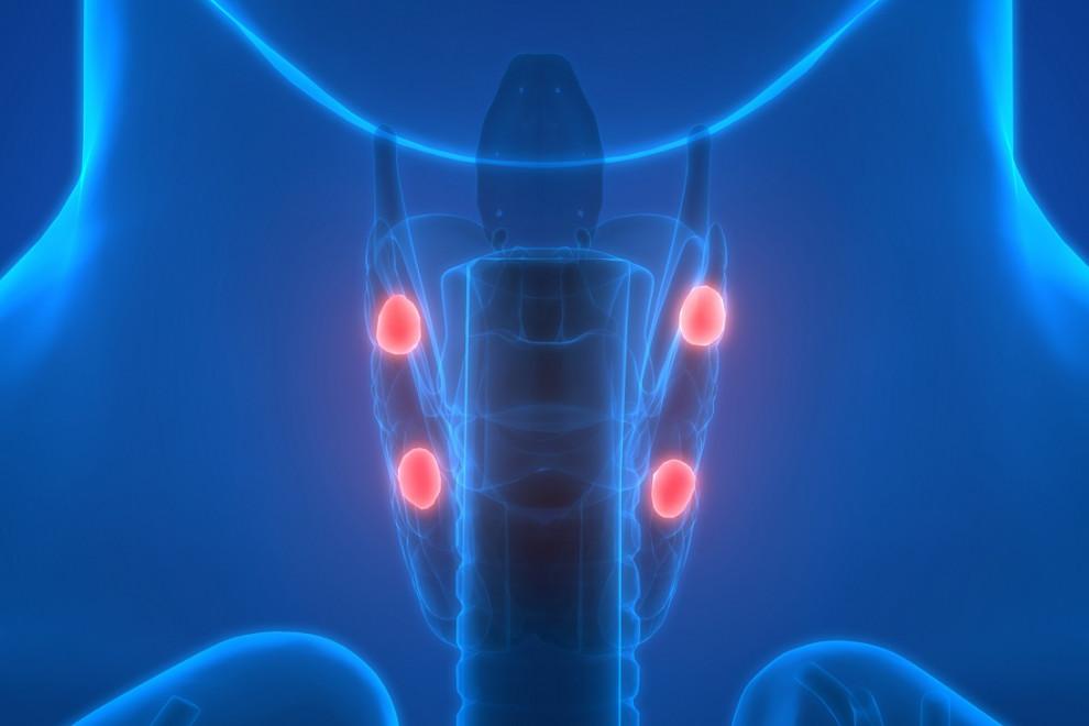 Glándulas Endocrinas del cuerpo humano