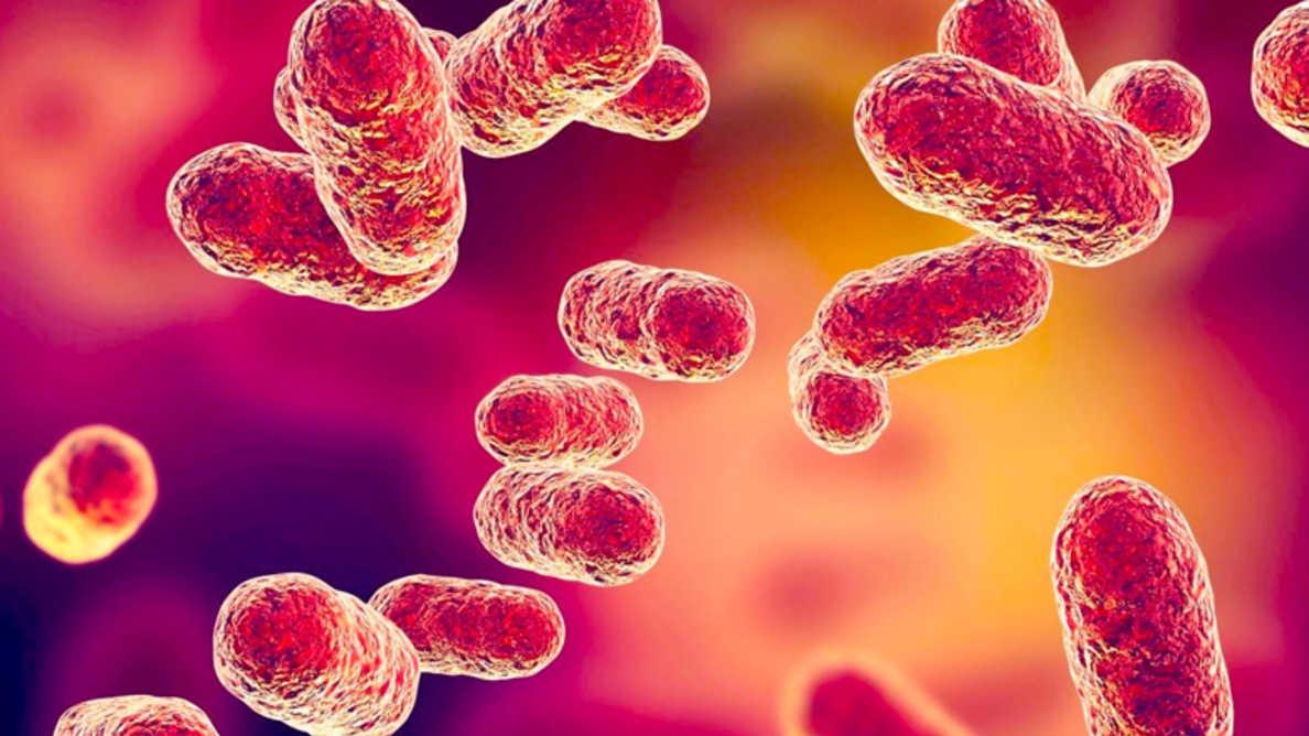 Porphyromonas gingivalis sangre