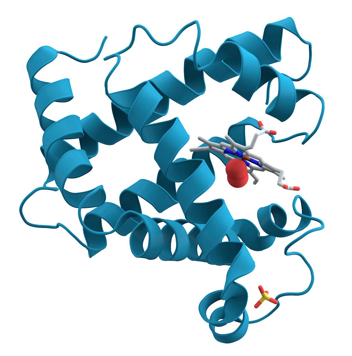 Mioglobina