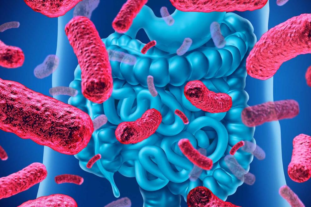 Flora intestinal