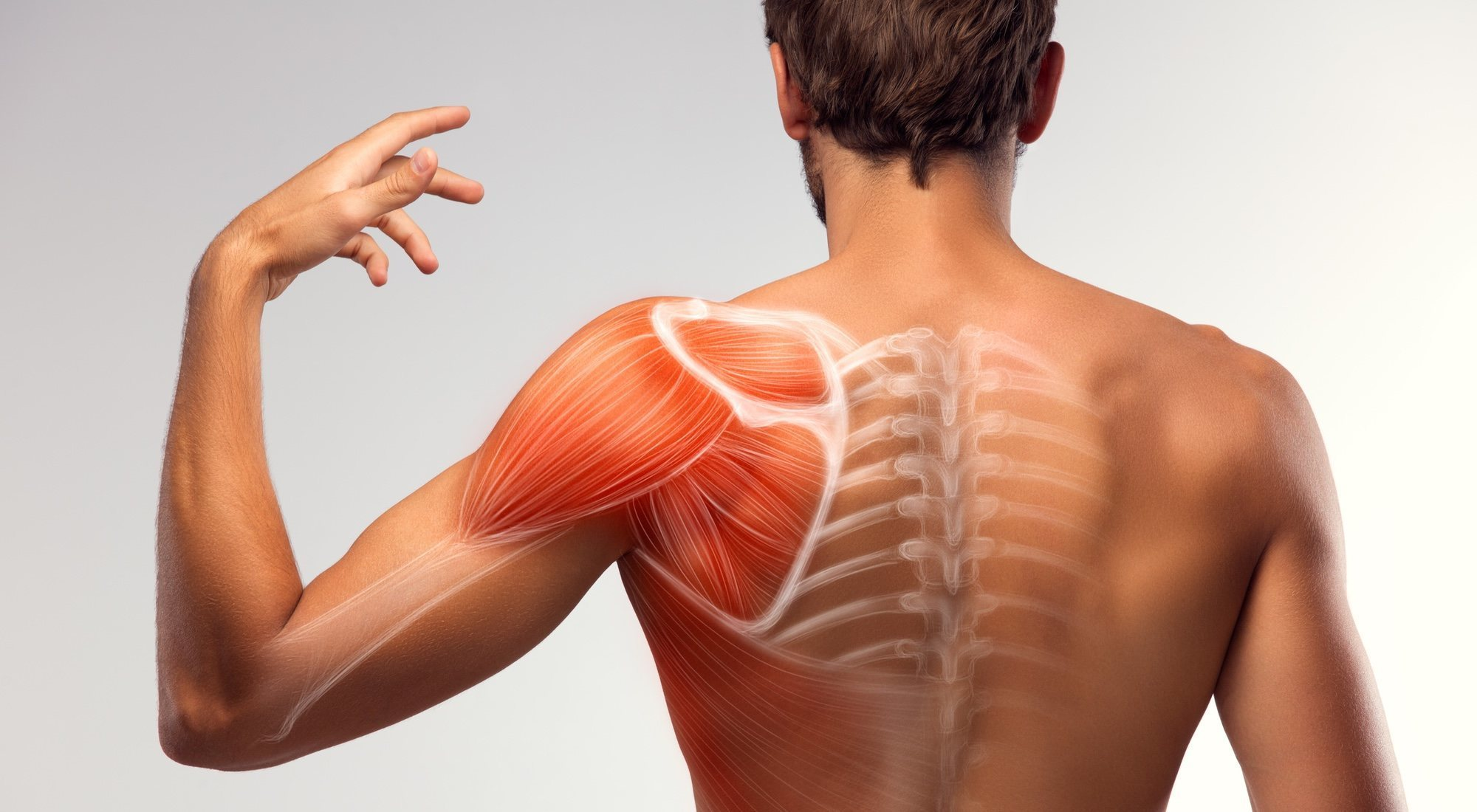 Estimular hipertrofia muscular