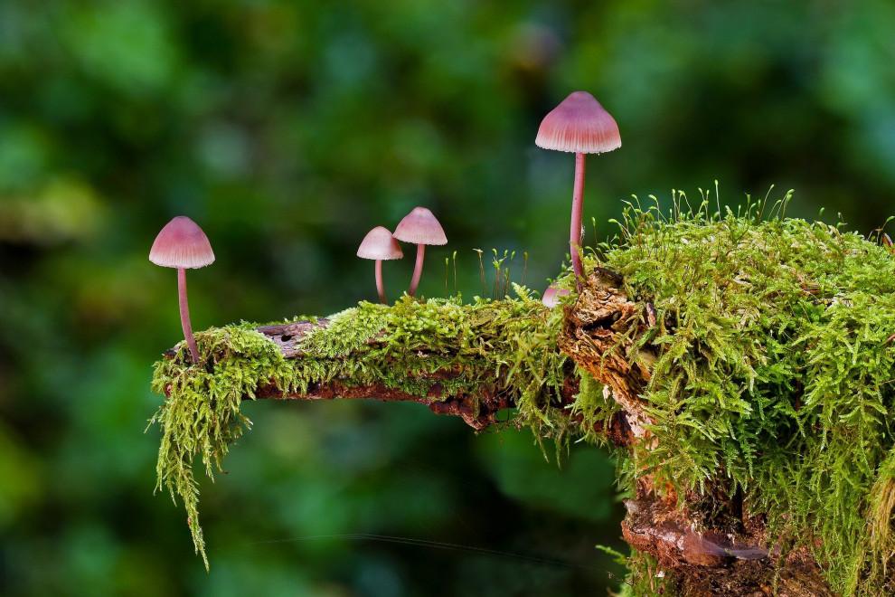 Diferencias hongo planta