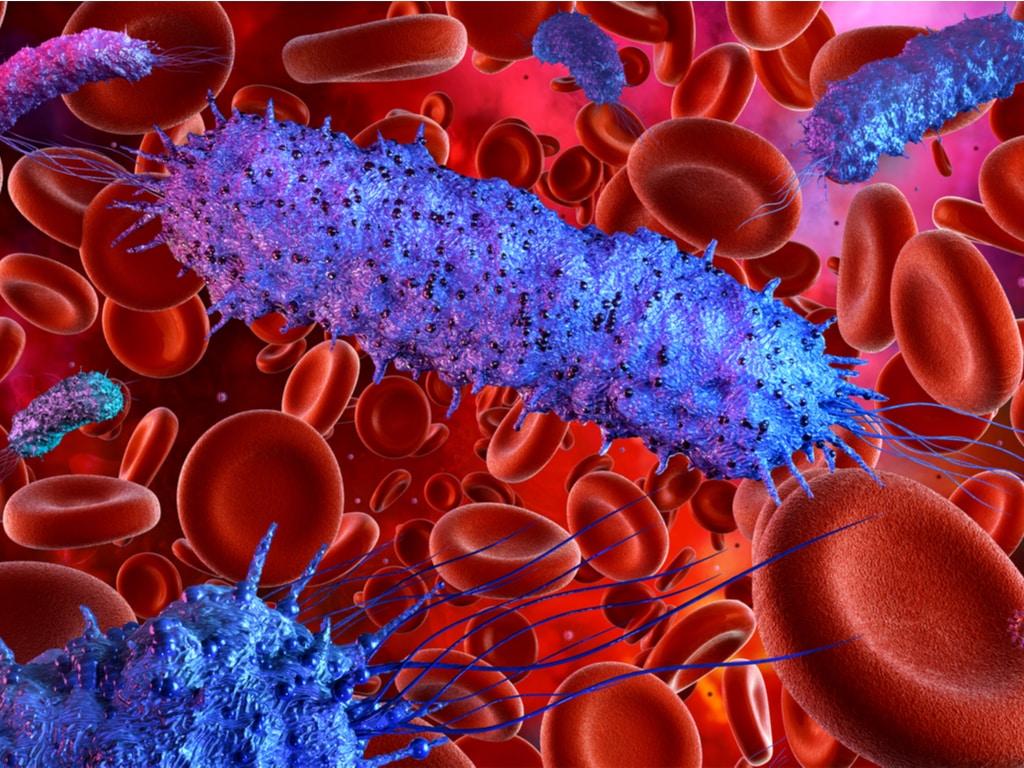 Bacterias sangre