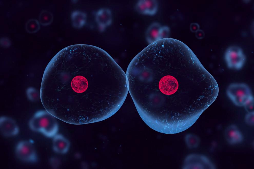 Tipos células eucariotas