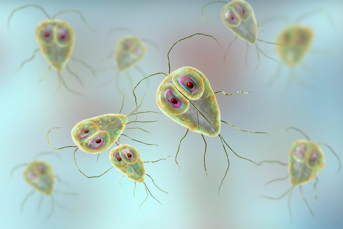Célula protozoaria