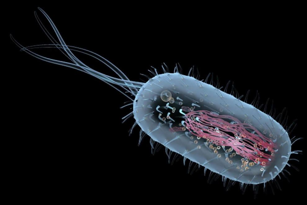 Tipos células procariotas