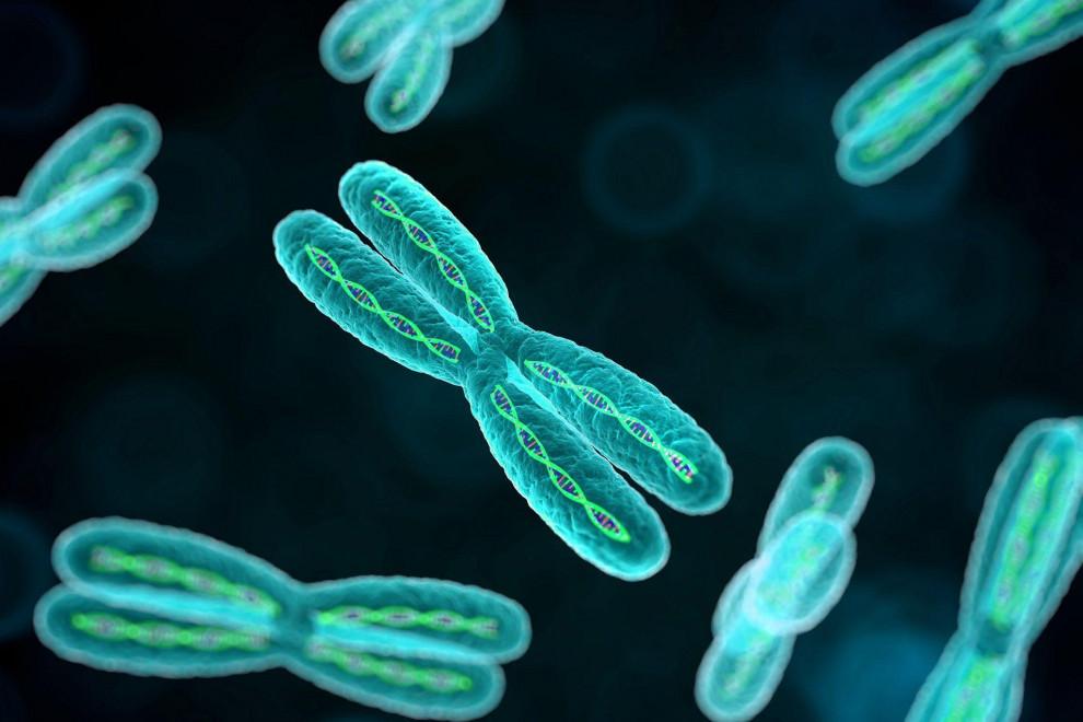 Partes cromosomas