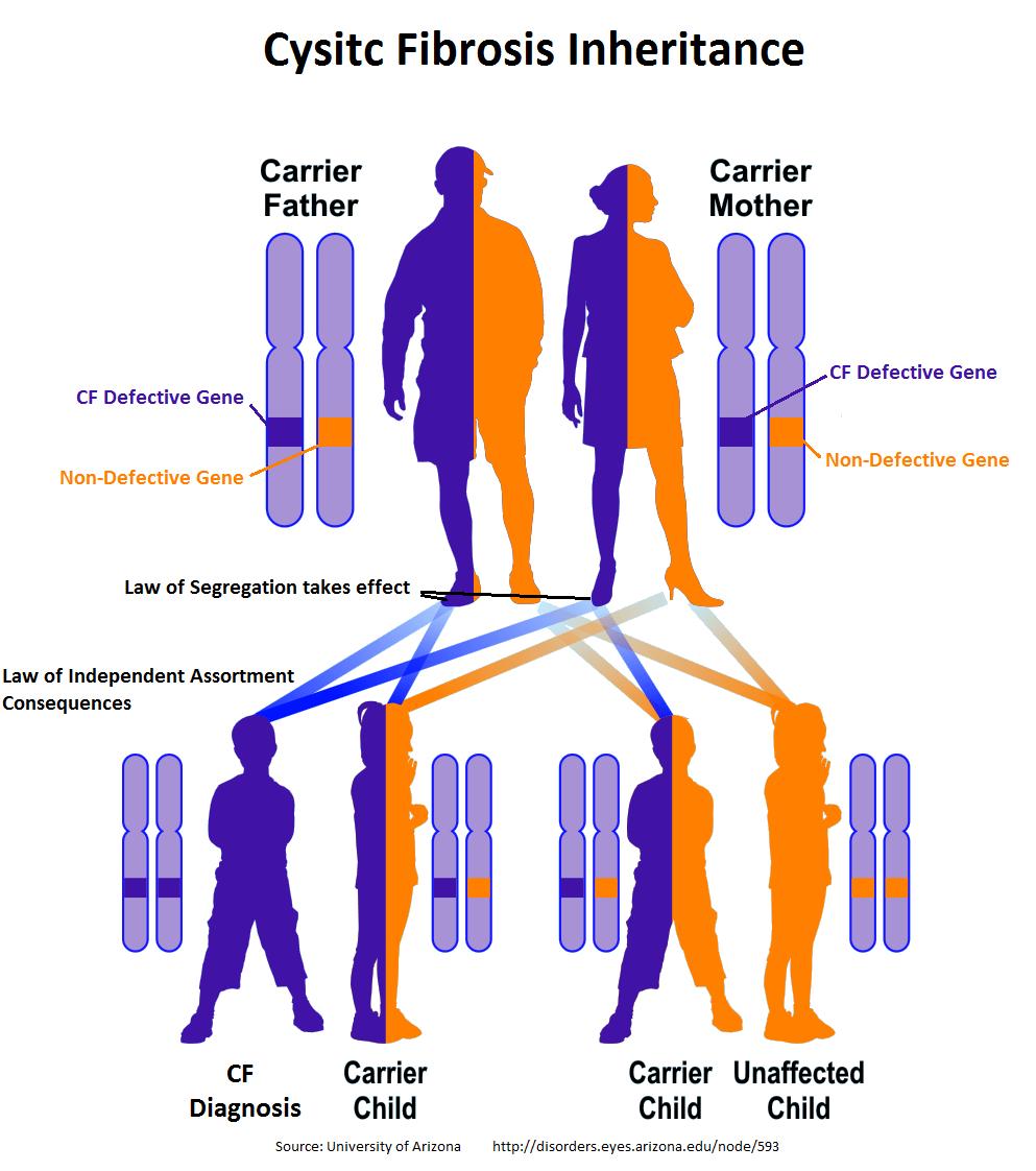 Causas fibrosis quística