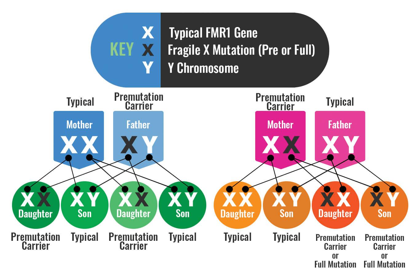 Causas síndrome X frágil