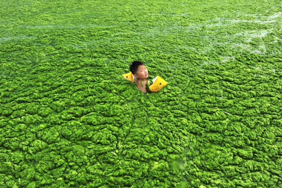 Diferencias plantas algas
