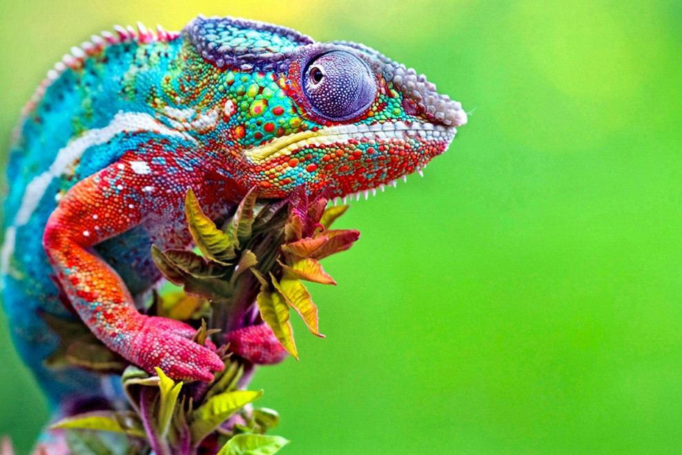 Tipos reptiles