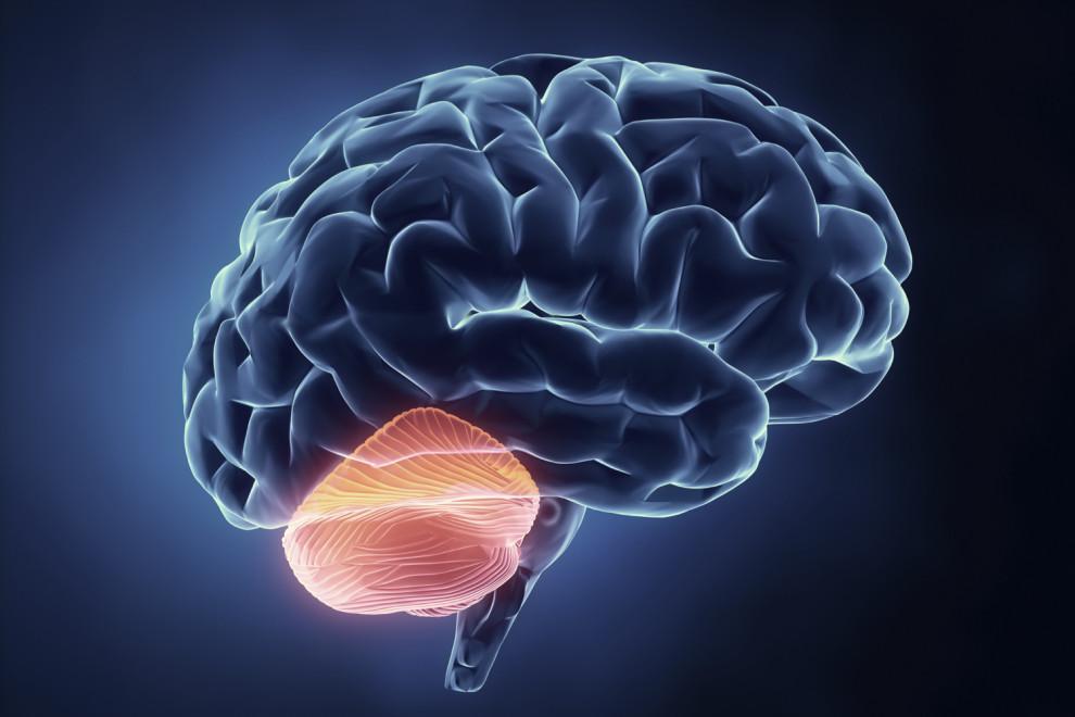 Diferencias cerebro cerebelo