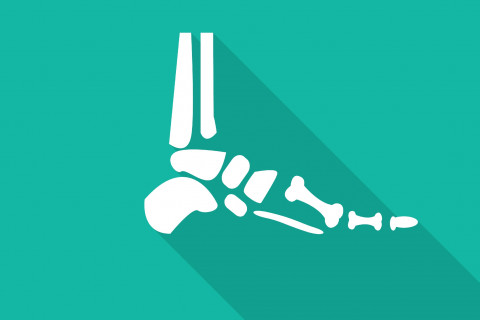 Huesos del pie