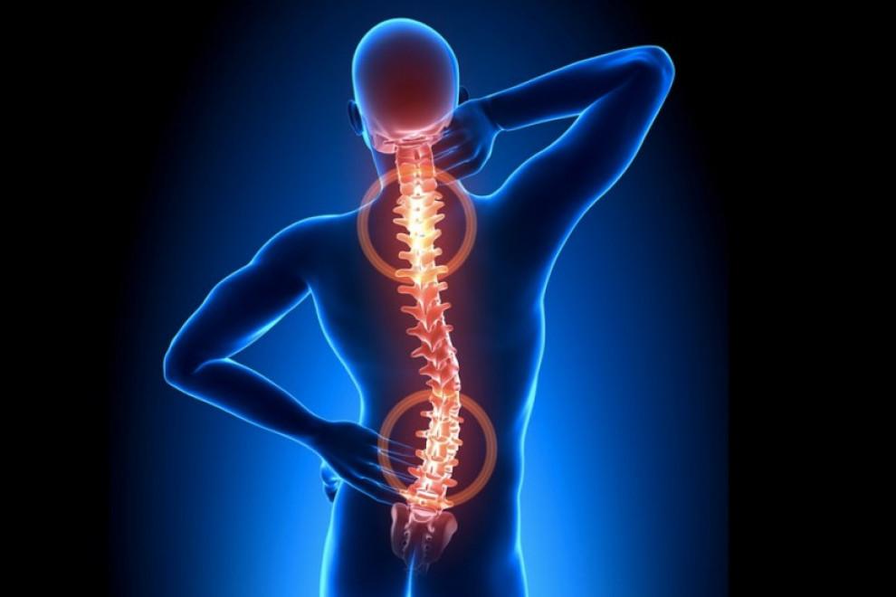 Partes columna vertebral