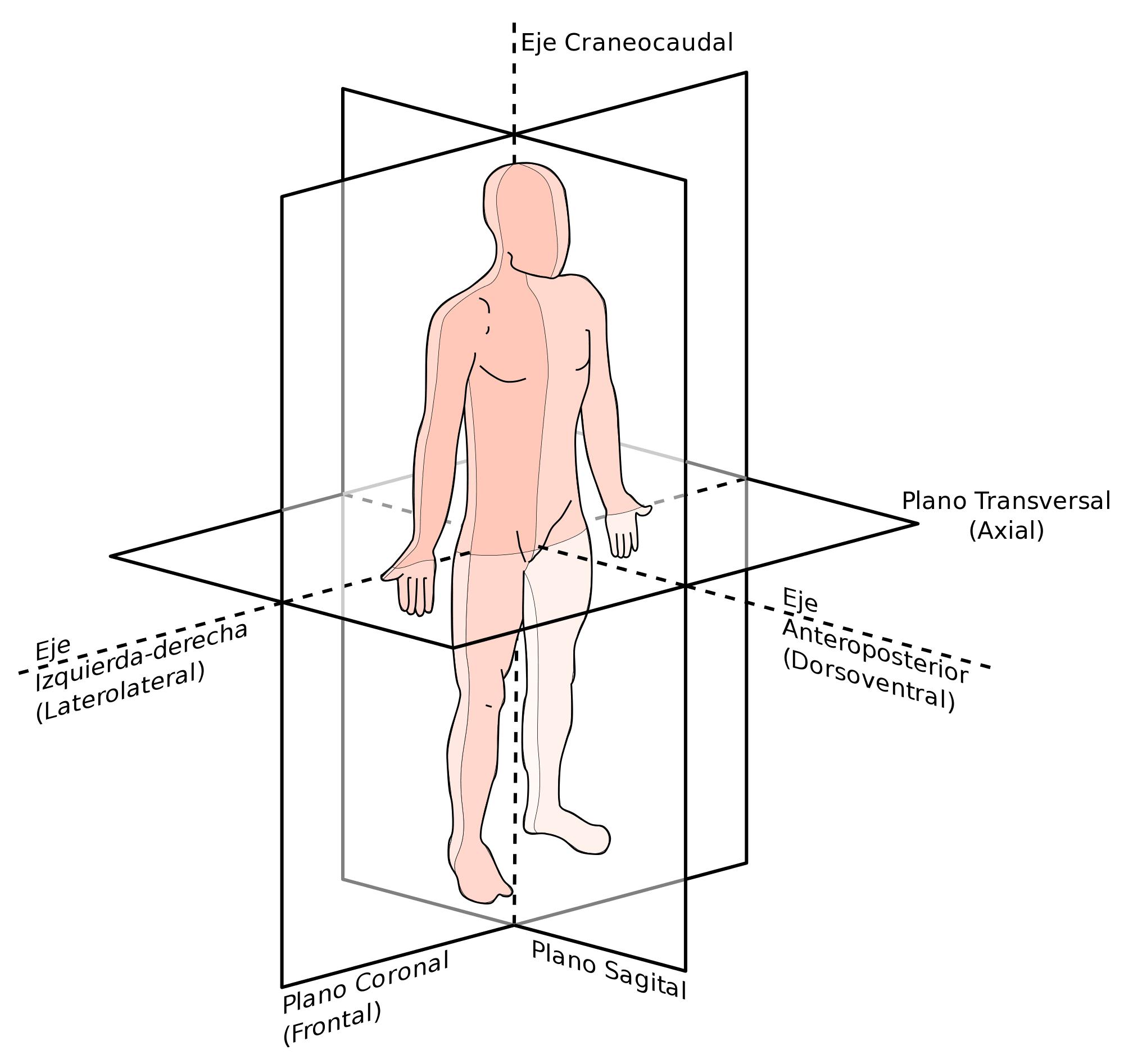 Línea media cuerpo