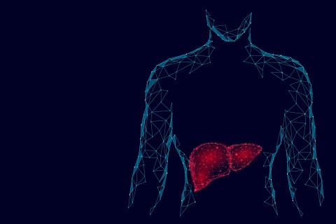 Partes del hígado